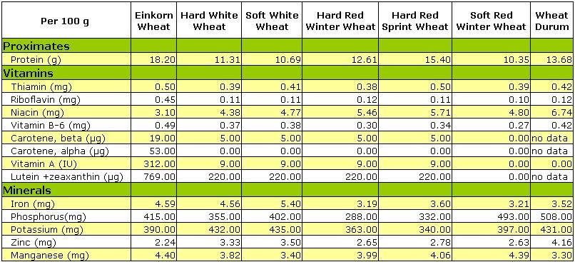 Brief Comparison of Einkorn and Major Types