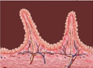 celiac villi
